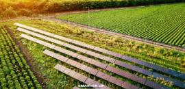 Smarter Up accoglie la sfida per promuovere l'agrovoltaico